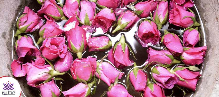گل گلاب برای گلاب اصل